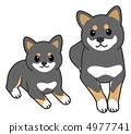 Shiba Inu(Kuroshiba)的父母子女 4977741