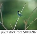 大山雀 山雀 野生鳥類 5008287