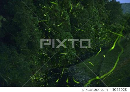 Firefly 5025928