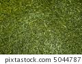 新茶葉 綠茶 中等綠茶 5044787