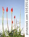 蘆薈 花朵 花 5053551