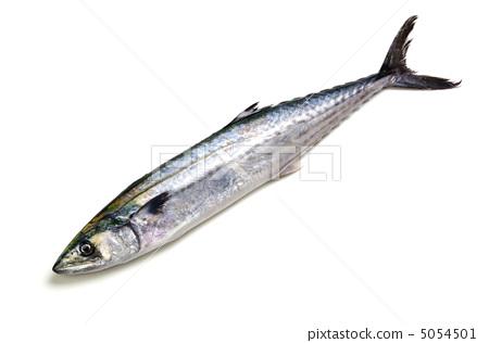 馬鮫魚 5054501