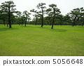 6月Pinus thunbergii和Pinaceae 38 5056648