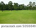 6月Pinus thunbergii Pinaceae 37 5056649