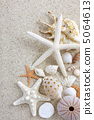 Summer sand beach seashell star 5064613