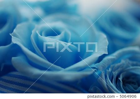 파란 장미 5064906
