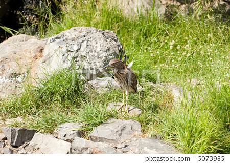 gray bird standing on a rock 5073985