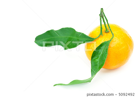 mandarin with green leaves isolated on white 5092492