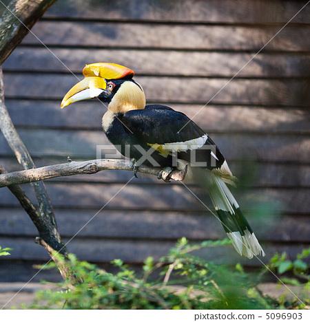toucan bird at the zoo 5096903