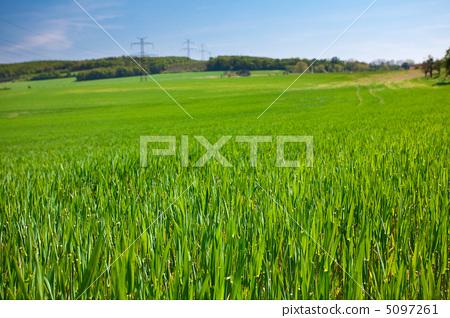 lush green grass against the blue sky 5097261