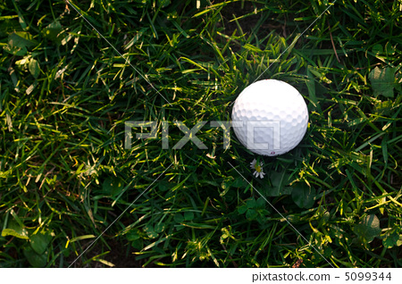 background of spring green grass and golf ball 5099344