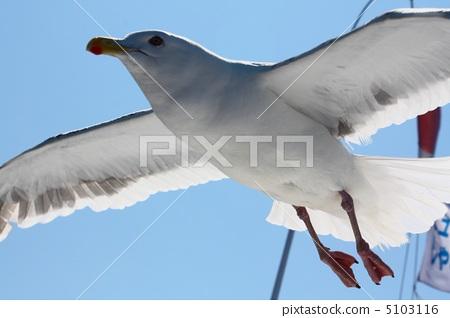 Seagull 5103116