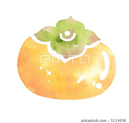 persimmon 5114958