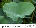 오가 연꽃 잎 5120344