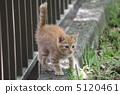 도둑 고양이 5120461