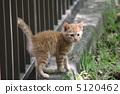 도둑 고양이 5120462