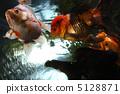 金魚 5128871