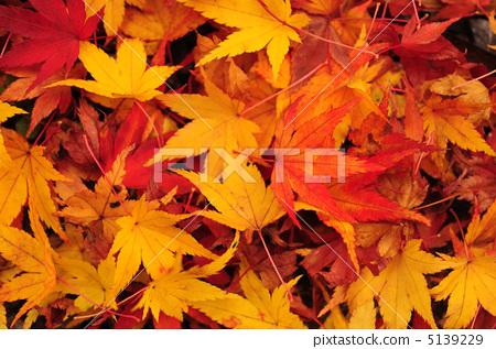 Late fall fallen fallen leaves 5139229