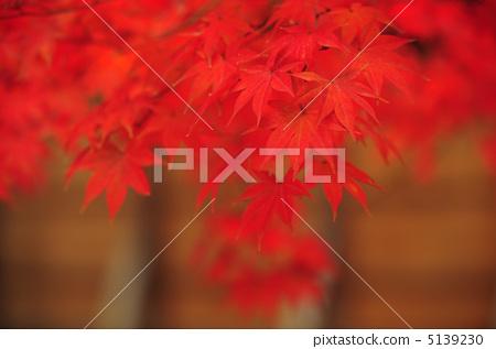 秋天正處於高潮 5139230