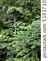 羊齒草 翠綠 椰子樹 5183710