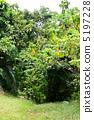 植物 樹和植物 西表島 5197228