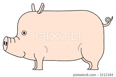 동물, 돼지, 포유류 5212184