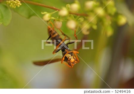 Bộ sưu tập côn trùng 2 - Page 13 5249416
