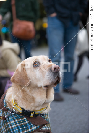 Guide dog 5253673