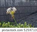 ดอกไม้ของ Hamayu 5259713