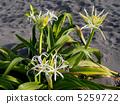 ดอกไม้ของ Hamayu 5259722