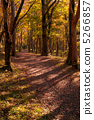 promenade, autumn, autumnal 5266857