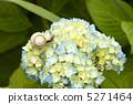 Snail 5271464