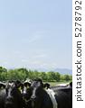 Cow 5278792