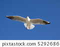 flight, migratory, bird 5292686