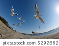 migratory, bird, flight 5292692