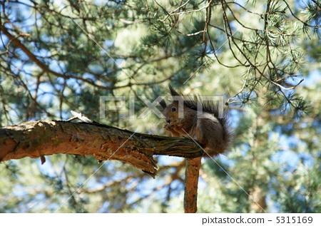 Squirrel 5315169