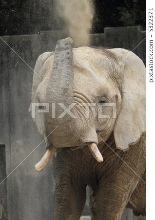 Bathing in an elephant's sand 5322371