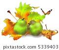 Pear 5339403
