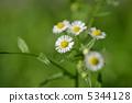 米迦勒雛菊 花朵 花 5344128
