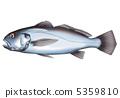 黃花魚 5359810