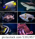 Exotic fishes 5362457