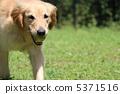 增加 獵犬 含在嘴裡 5371516