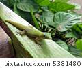 蜥蜴 爬蟲類的 爬行動物 5381480