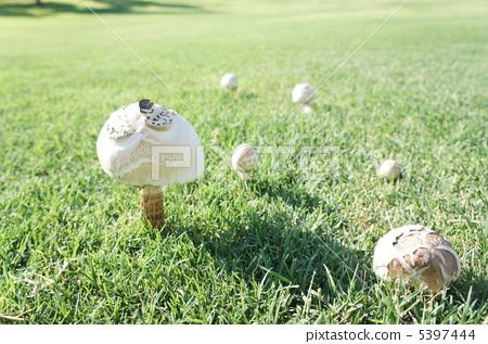 蘑菇2 5397444