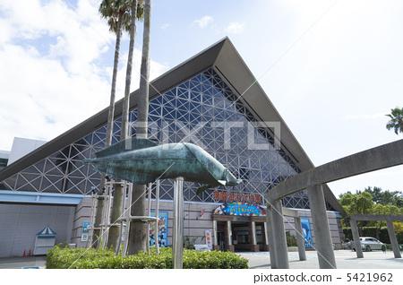 蘇馬海洋水族館 5421962