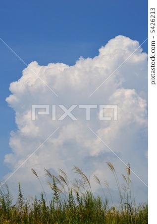 Susuki和積雨雲 5426213