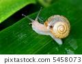 snails 5458073