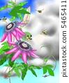 Watch grass 5465411