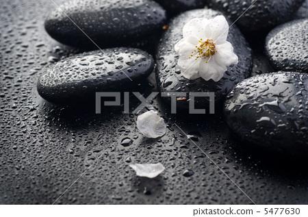 Wet Zen Spa Stones 5477630