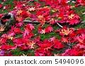 彩色的葉子紅葉, 5494096